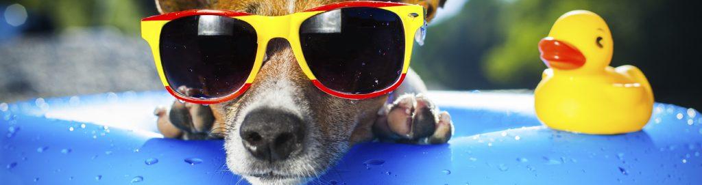 Strand Familienurlaub Hund und Entchen