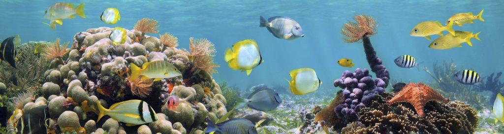 Riff Malediven Tauchen