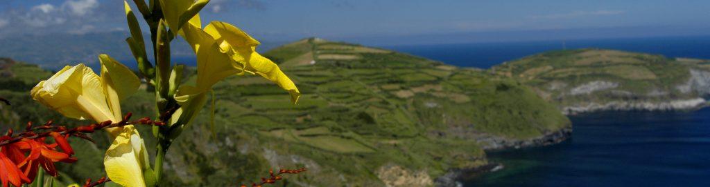Erlebe Madeira jetzt hautnah
