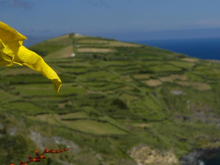 9 Tage Entspannung auf Madeira