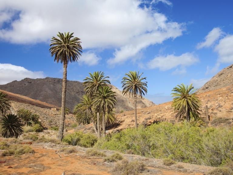 8 Tage im exklusiven 5*Hotel Lopesan Baobab Resort auf Gran Canaria